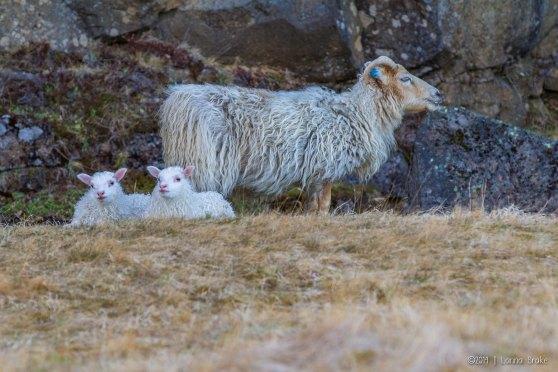 Iceland_20140504_Thingvellir-43_WEB