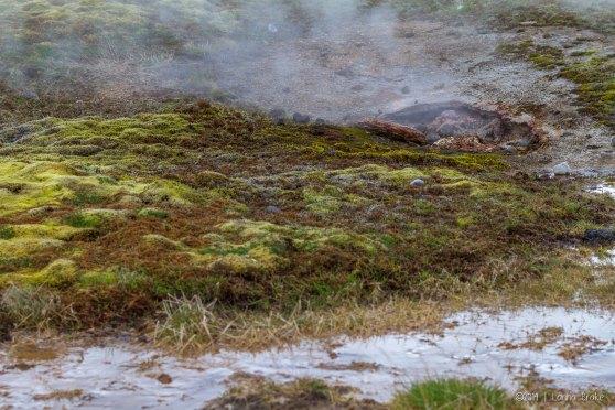Iceland_20140505_Geysir-31_WEB