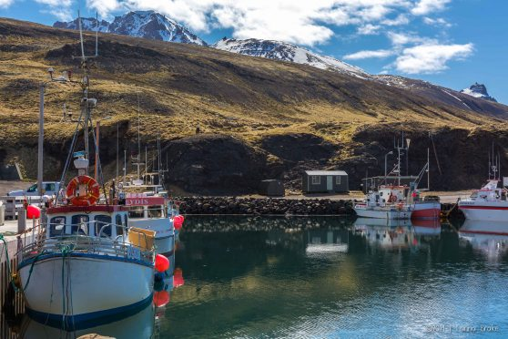 Iceland_20140515_Egilsstadir to Bakkagerdi Puffins-87_WEB