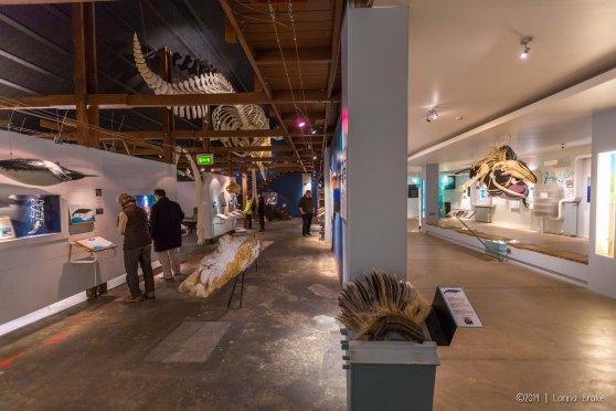 Iceland_20140518_Husavik Whaling Museum-5_WEB