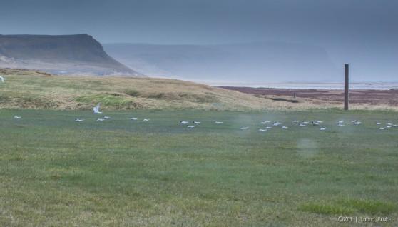 Iceland_20140524-25_Breidavik to Rekjavik-8_WEB