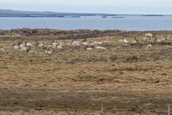 Iceland_20150513_Hofn-to-Breiddalsvik-25_WEB